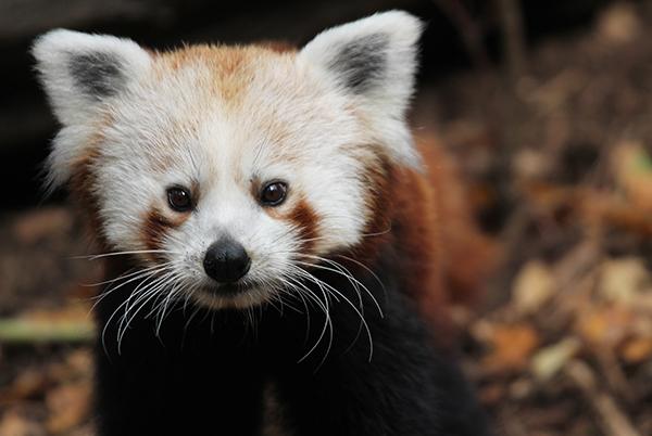 Jeden kraj – jedna vstupenka – tři různé zoo. Navštivte zoologické zahrady v Ústeckém kraji a vyhrajete vyhlídkový let!