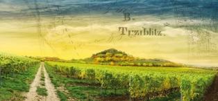 vinice-koskov.jpg